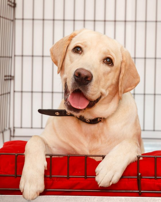 Your Complete Guide to Dog Crates