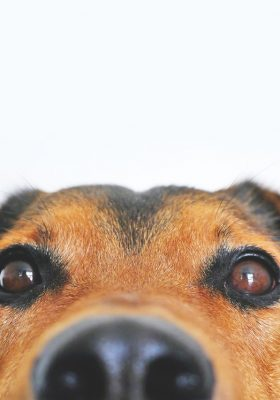 adorable-blur-breed-close-up-406014