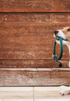 Best Dog Collars For 2021