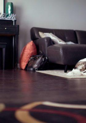 Best Vacuums for Pet Hair in 2020