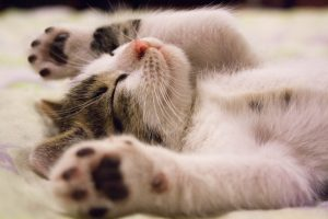 Guide to Cat Behavior and Body Language