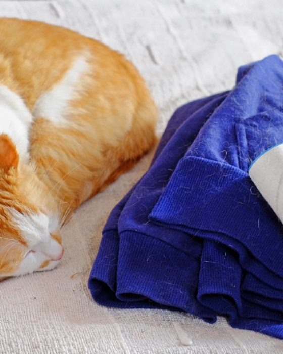Cat Hair Off Your Clothes