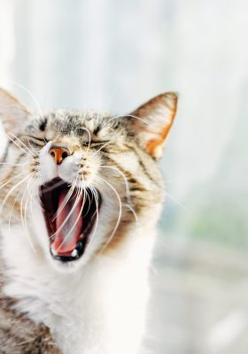 What to Do When Your Cat Has Hiccups