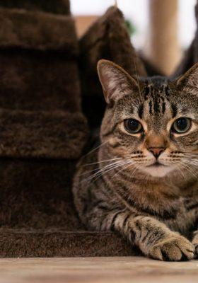 Dealing With Your Cat's Anxiety