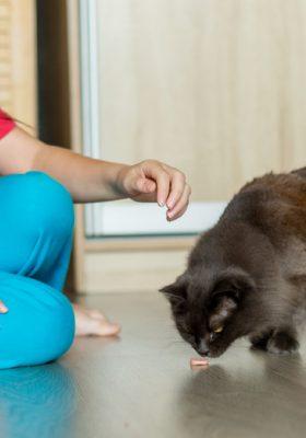discipline a cat