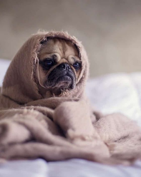 Reasons Why Your Dog is Feeling Sad