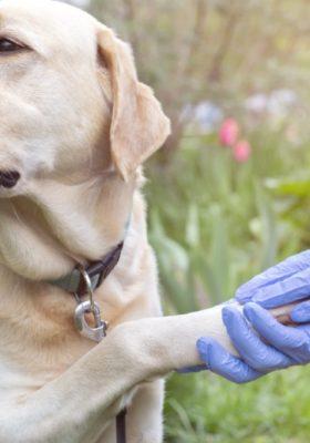 Dog's Allergies