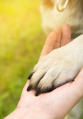 Your Guide on How to Get an Emotional Support Dog