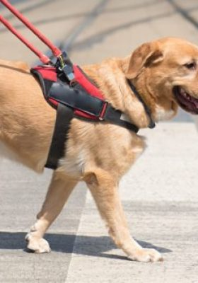 Helping Your Service Dog Combat Anxiety