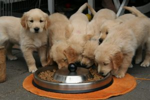 How Much Should You Feed Your Dog