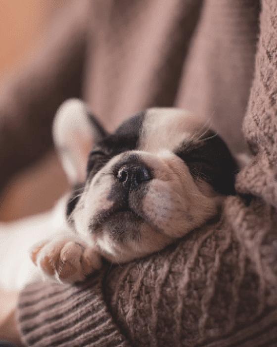 How to Adopt a Newborn Dog