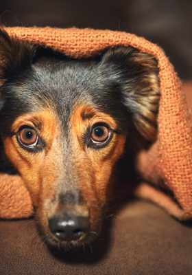 How to Calm Down Your Anxious Dog