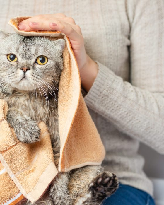 How to Easily Give Your Cat a Bath
