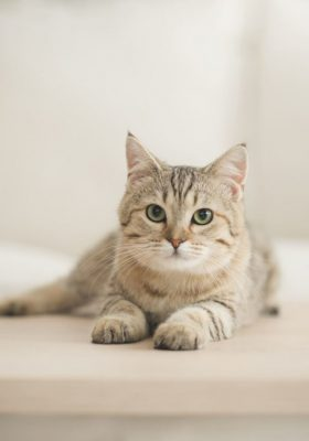 Improving Your Furry Friend's Endocannabinoid System