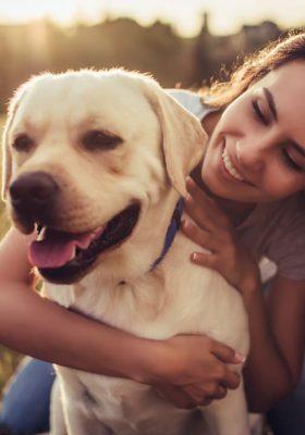 Living With a Healthy Labrador Retriever