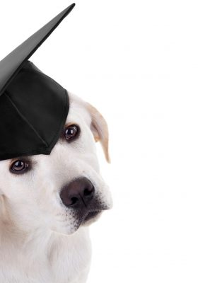 Obedience Training at Home