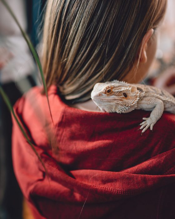 Taking a Look at the Best Lizard Pets