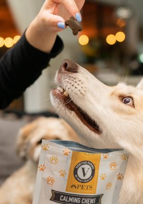 The Best Natural Pet Products in 2020