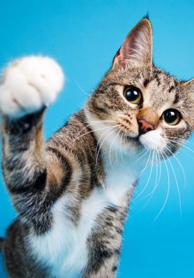 The Ultimate Guide for the Cutest Cat Breeds