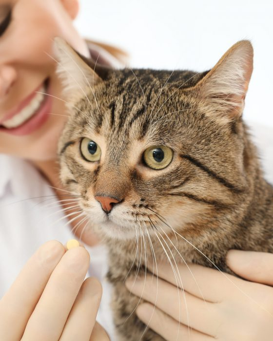Tips on How You Can Give Your Cat a Pill