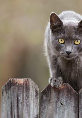 Your Guide to Cat Repellent: How to Keep Stray Cats Away